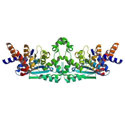 Crystal structure of tyrosine-tRNA ligase from Helicobacter pylori, solved by SSGCID